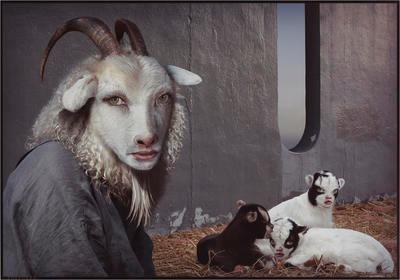 Shepherd I